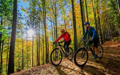 Explore the Forest with E-bikes